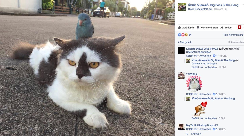 Da sitzt doch tatsächlich ein Vogel auf dem Kopf dieser Katze