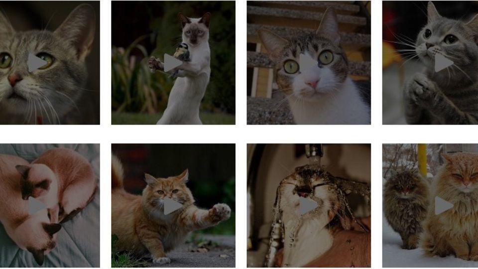 Jedes Kätzchen gibt ein Mauzen.