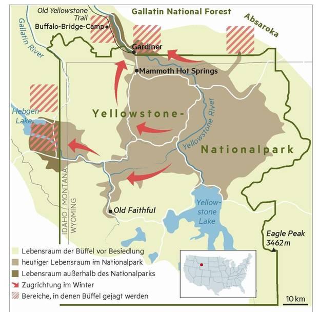 Grafik: Lebensraum der Büffel um den Yellowstone-Nationalpark