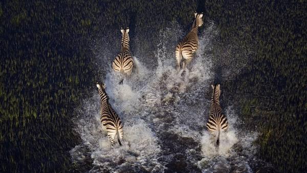 """""""Das Highlight einer Botswana-Reise für mich und auch für meine Kunden, ist meistens ein Hubschrauberflug über das Okavango-Delta"""", erzählt der Fotograf. """"Die Türen sind ausgehängt und man sitzt angeschnallt quasi draußen, die Füße auf die Kufen des Fluggerätes abgestützt."""""""
