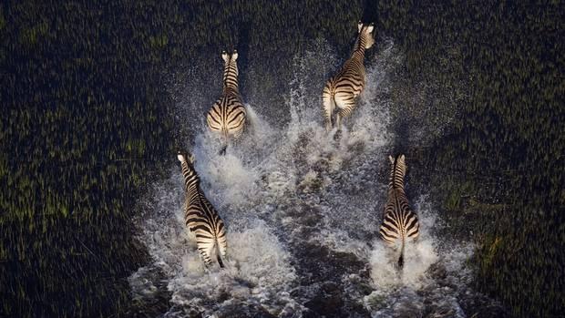 """""""Das Highlight einer Botswana-Reise für mich und auch für meine Kunden ist meistens ein Hubschrauberflug über das Okavango-Delta"""", erzählt der Fotograf. """"Die Türen sind ausgehängt und man sitzt angeschnallt quasi draußen, die Füße auf die Kufen des Fluggerätes abgestützt."""""""