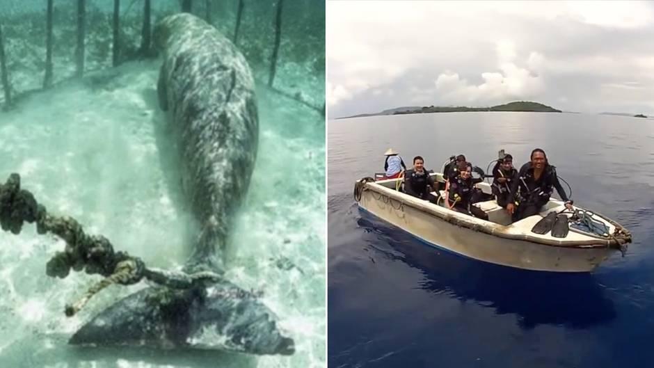 Tierquälerei für Touristen: Gieriger Fischer hält seltene Seekühe gefangen - dann greifen diese Taucher ein
