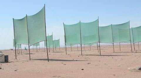 Grüne Netze an Holzstangen - das ist alles. Dennoch steckt ein ehrgeiziges Projekt dahinter.
