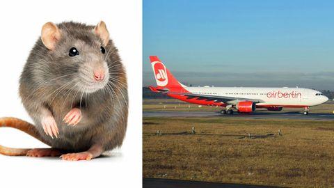 Ratte legt Flieger von Air Berlin lahm