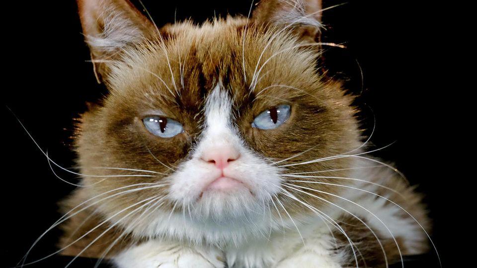 Internetphänomen Grumpy Cat: Was verrät die Katzenmimik?