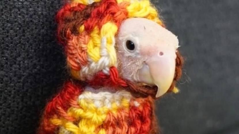 Federlos glücklich: Ausgestoßen aus dem Nest, fand dieser kleine Vogel ein tolles neues Zuhause