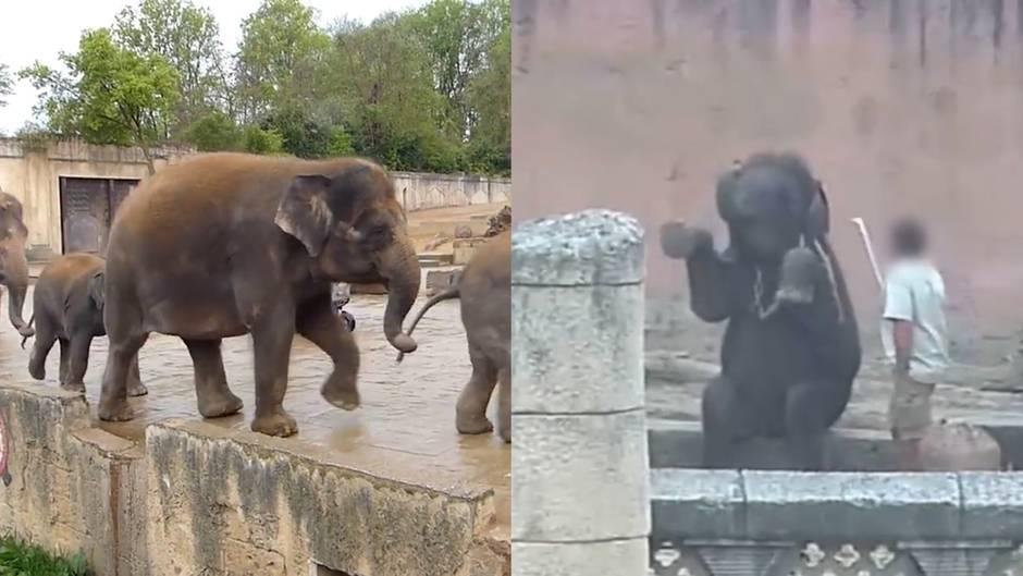 Tierschutzorganisation PETA: Video zeigt bedrückende Aufnahmen aus dem Zoo Hannover