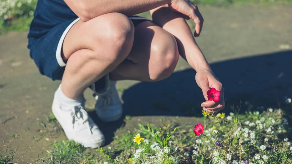 Teure Kavaliersdelikte: Blumen pflücken im Park? Das kann ganz schön teuer sein