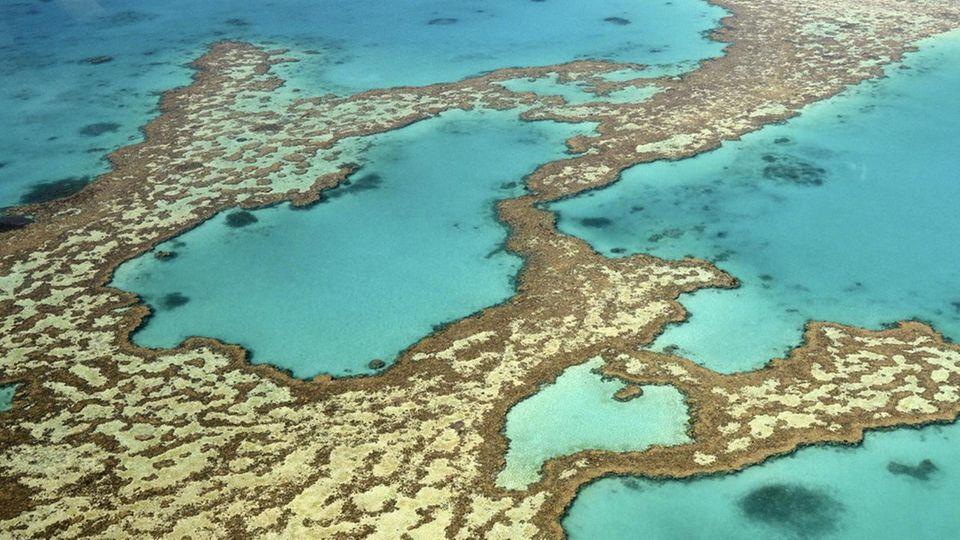 Ein Luftaufnahme zeigt das sogenannte Herzriff des Great Barrier Reefs vor Australien