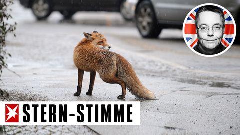 Fuchs in der Großstadt