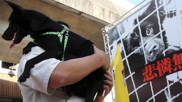 Taiwan - Hunde - Katzen - Verzehr - Tierschutz
