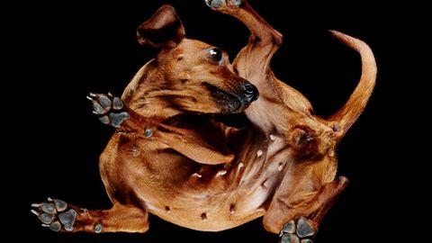 """""""Underlook Project"""": Es ist schon ein Hundeleben – so von unten betrachtet"""