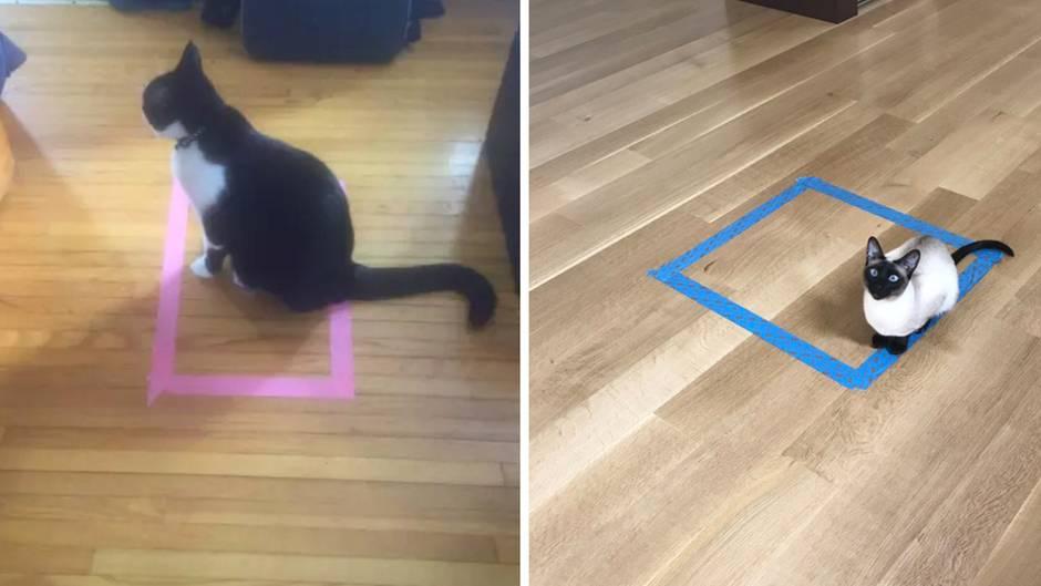 Katzen im Rechteck