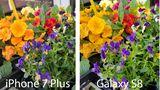 Das Galaxy S8 (rechts) neigt zu leuchtenderen Farben, wie man etwa an den Blüten und vor allem den grünen Blättern sieht. Ob einem das gefällt, ist Geschmackssache. Das iPhone 7 Plus legt eher Wert auf realistische Farben.