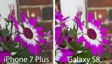 Das Galaxy S8 macht das hellere Bild, doch insgesamt gefällt uns das iPhone 7 Plus hier besser. So ist die Unschärfe beim Apple-Handy besser gestaffelt, die Blumen im Hintergrund sind nicht so unscharf wie die Mauer, die noch ein paar Meter dahinter liegt. Beim Galaxy S8 ist dagegen alles etwa gleich unscharf.