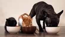 Hund und Katzen beim Fressen