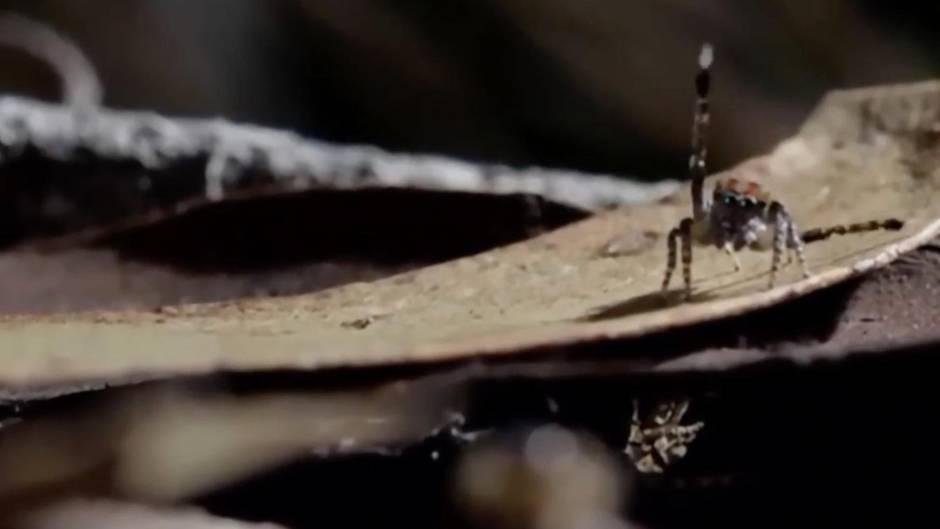 Studie: Spinnen könnten die Menschheit ausrotten - theoretisch