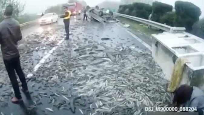 Unfall mit Fisch-Ladung