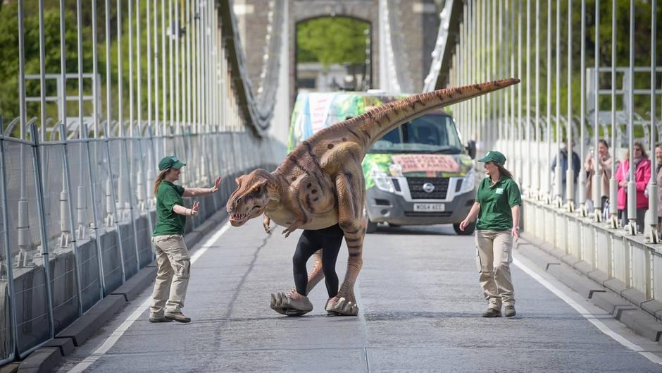 Das Modell eines Tyrannosaurus rex (T-Rex) Dinosauriers läuft über die Clifton Suspension Bridge