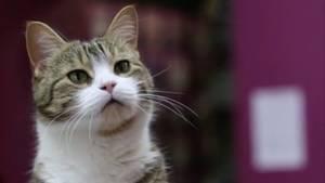 Katze kann Kopfrechnen