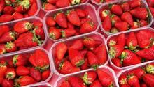 Erdbeeren könnten dieses Jahr spürbar teurer werden