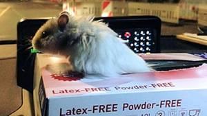 Hamster Henry in einer Pappschachtel auf dem Armaturenbrett eines Polizeiwagens
