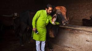 """Naveen Sharma sorgt in Indien dafür, dass es Kuh """"Honey Singh"""" im Kuhhospiz an nichts fehlt"""