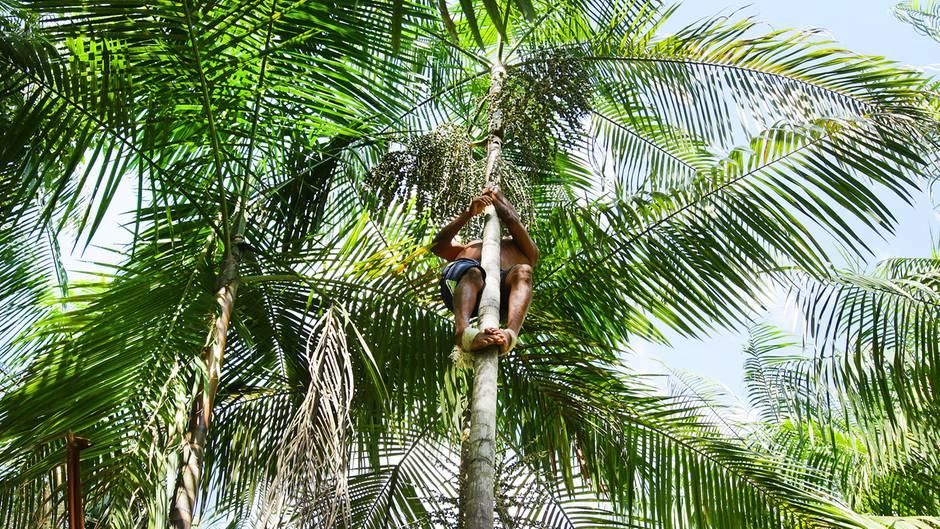 Amazonasfrucht Açaí