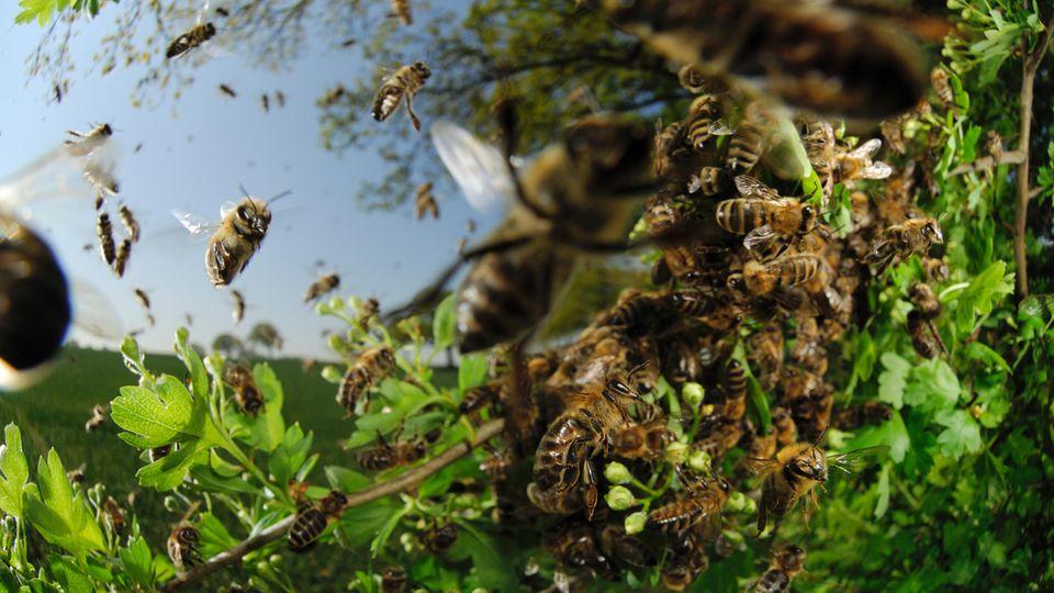 Bienensterben: was verursacht das große Sterben?