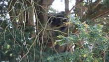 In diesem Baum in Mönchengladbach blieb der Leichnam des jungen Mannes wochenlang unentdeckt