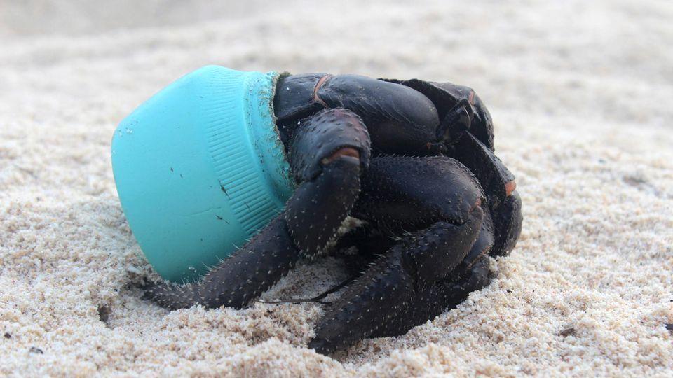Eine Krabbe hat sich in ein Stück angespülten Plastikmüll verkrochen