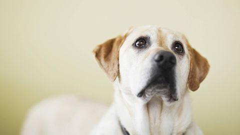 Traurig schauender Hund