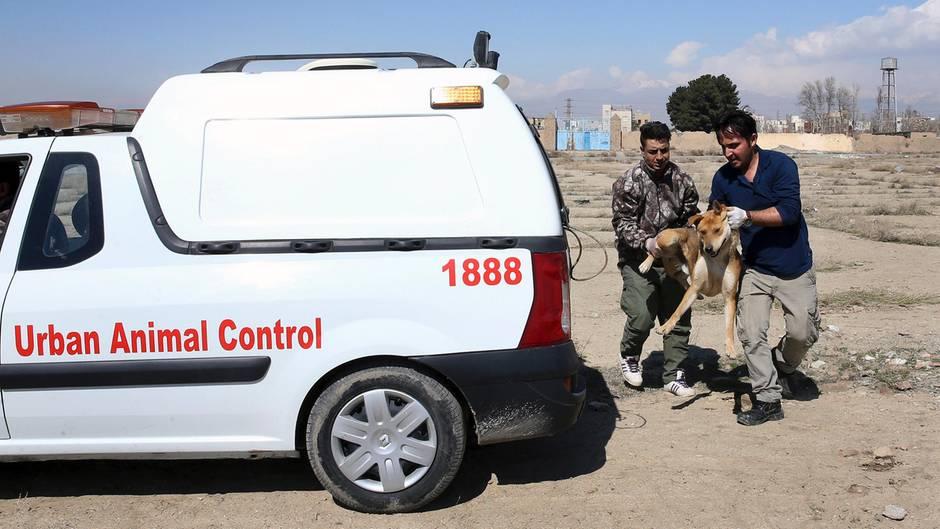 """Streunende Hunde werden von der """"Urban Animal Control"""" in Teheran gefangen und in völlig überfüllten Tierheimen sich selbst überlassen. Doch sie zählen noch zu den Glücklicheren - manch andere werden einfach erschossen oder vergiftet."""