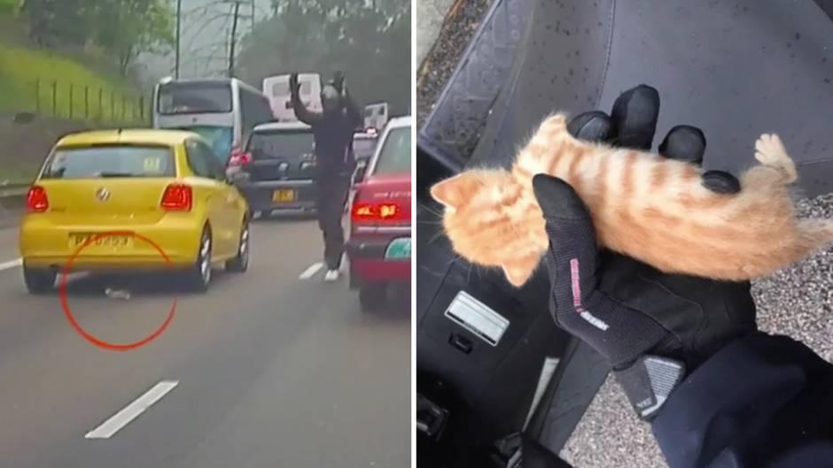 Mitten auf der Autobahn: Motorradfahrer rettet Katzenbaby vor dem sicheren Tod