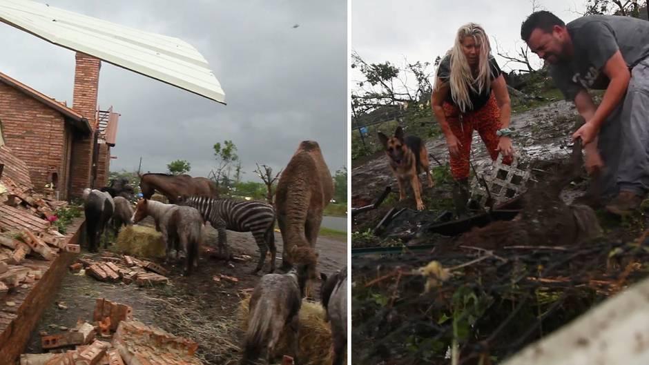 Extremes Wetter in Texas: Sturmjäger rettet Fohlen aus den Trümmern eines Tornados