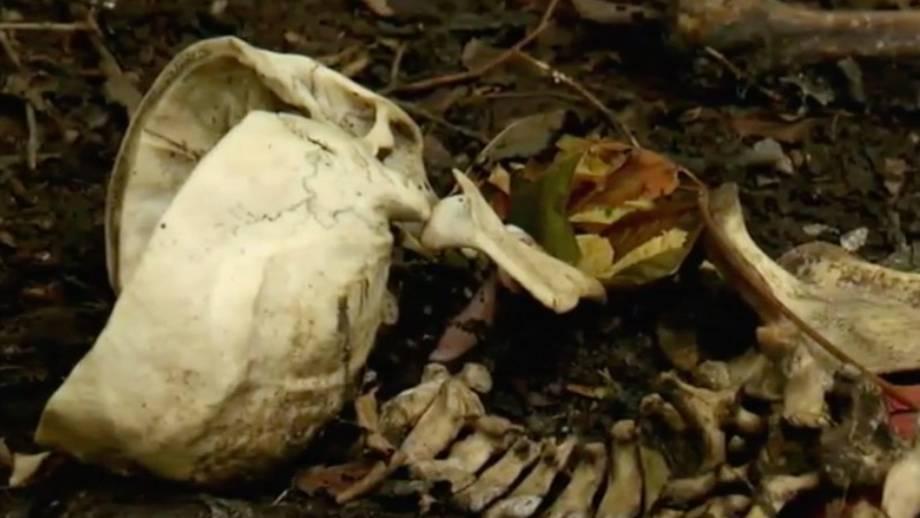 Mysterium des Lebens: Was passiert mit dem Körper nach dem Tod?