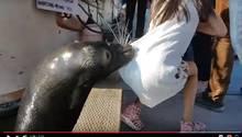 Seelöwe schnappt Mädchen: Das Video des Vorfalls macht derzeit auf YouTube die Runde