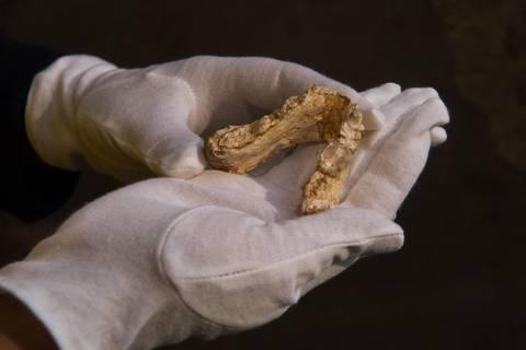 Fossilienfunde: Stammt der älteste Vormensch doch aus Europa?