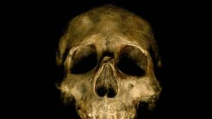 Der menschliche Schädel gehört laut Polizei zu einem etwa 20-35 Jahre alten Mann (Symbolfoto)