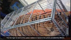 Das Bild des Tigers veröffentlichte die vietnamesische Nachrichtenseite Tuoi Tre News