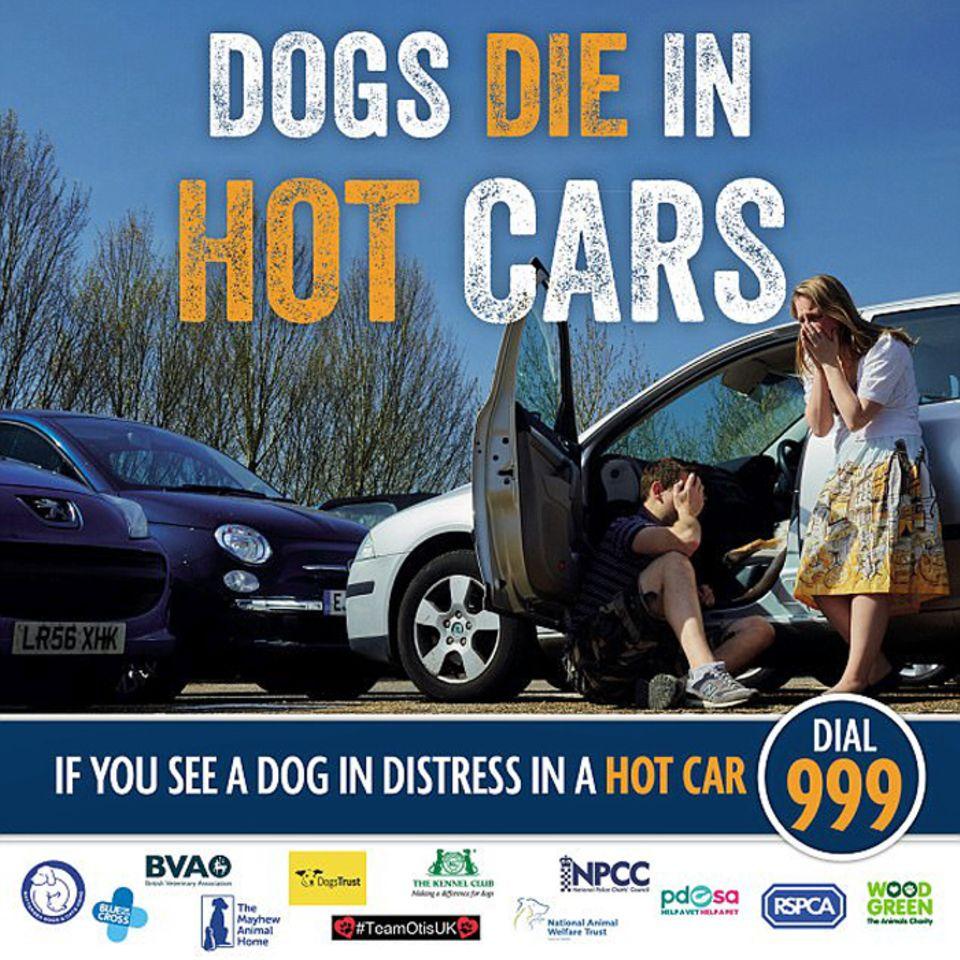 """Hunde im heißen Auto: Geständnis unter Tränen: """"Meine Nachlässigkeit hat meine geliebten Hunde getötet"""""""