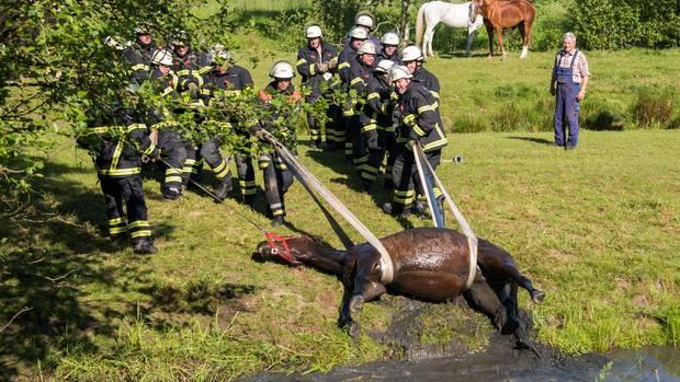 Feuerwehrleute ziehen in Hamburg-Altengamme ein Pferd aus einem Wassergraben. Hengst Laban war am Morgen auf einer Weide in den Graben gerutscht und musste mit viel Muskelkraft gerettet werden.