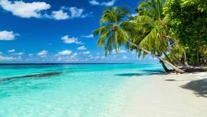 So viel besser als hinter Gittern: ein Strand in der Karibik (Symbolbild)