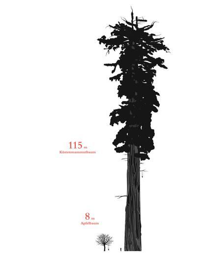 """Steht man vor einem acht Meter hohen Apfelbaum, kann der schon ziemlich groß wirken. Doch wie winzig ist er in Relation zu einem 115 Meter hohen Küstenmammutbaum! Erst wenn man die beiden Pflanzen nebeneinander stellt, werden die Relationen deutlich. Genau das ist das Ansinnen von """"Size Matters: Das Buch über wahre Größe""""."""