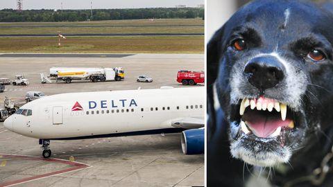 Der Zwischenfall mit dem Hund ereignete sich am Pfingstsonntag an Bord einer Maschine von Delta Air Lines.