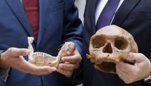 Der Schädel, der in Marokko ausgegraben wurde