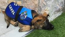 Der junge Gavel liegt in Polizeiuniform auf dem Boden