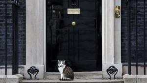 Der politischste Kater in ganz London: Larry vor seinem Zuhause in der Downing Street