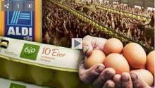 Bio-Eier von Aldi-Süd: Die Mär von glücklichen Hühnern