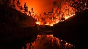 Portugal: Zahlreiche Menschen sterben bei Flucht vor Waldbränden